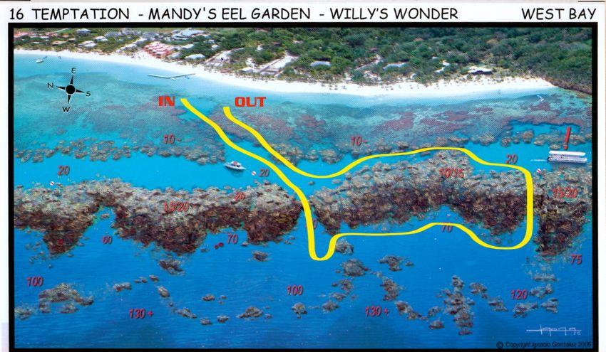 mandys-eel-garden