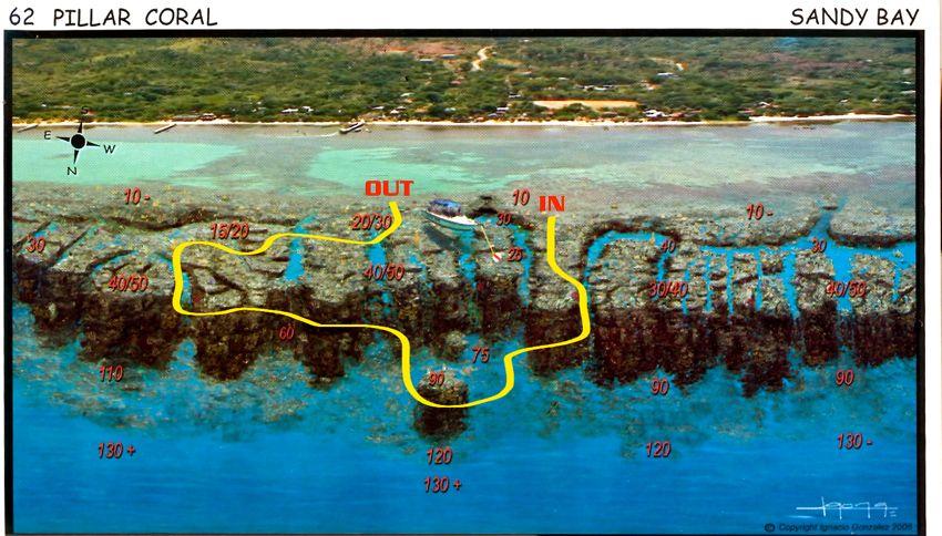 pillar_coral