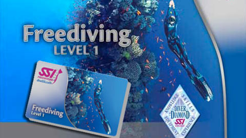 freediving_lv1