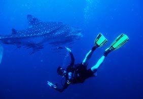 shark_diver_spec