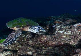 underwater_naturalism