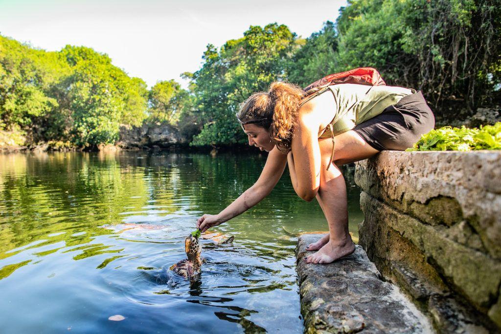 turtle sanctuary nungwi zanzibar