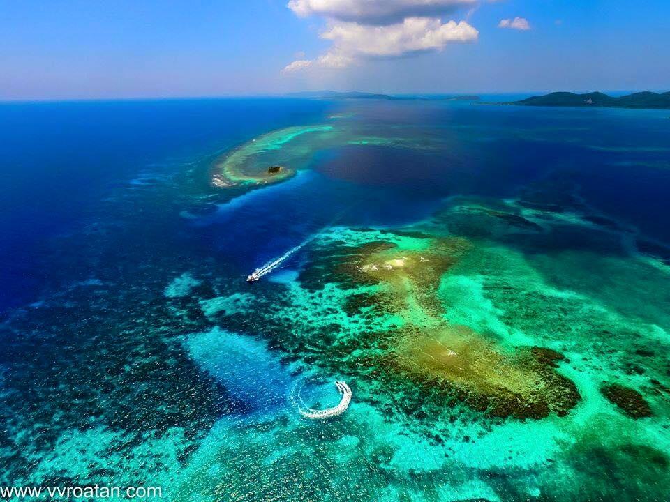 The 5 Best Sites Where To Dive Roatan Honduras Tgi