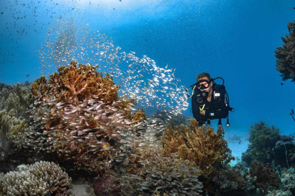 tumbata reef zanzibar