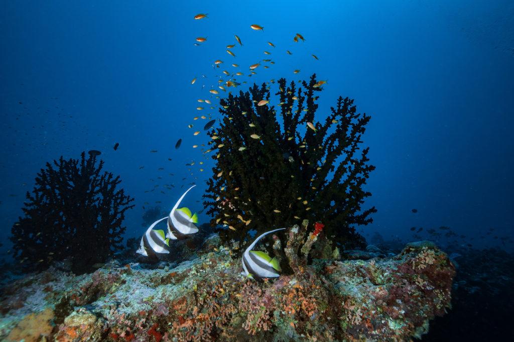 reef vavuu atoll